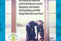 Lessons from my Rescue Dog / What are the lessons you've learned from your rescue dog? Share them with us at Projectbluecollar.com   #lessonsfrommyrescuedog