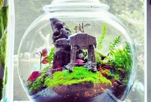 terrariums and green stuff