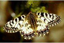 Flowers and butterflies / Flowers and butterflies postcards