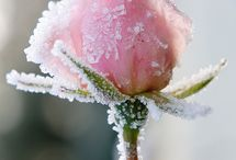 Frosted / by Stephanie Hirst