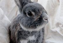 Zvieratá a domáci miláčikovia / Tu budem pridávať rôzne zvieratká... . postupne budem pridávať mám aj iné veci na práci staranie a o  Pinterest.. Ahojte Kika.. :)
