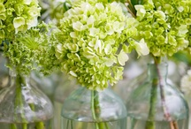 LIV | Greens & Flowers / by LIVlicious Interieurstyling