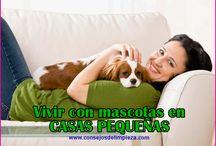 MASCOTAS EN CASAS PEQUEÑAS / #MASCOTAS EN #POCO #ESPACIO Los mejores 15 consejos y sugerencias para vivir con mascotas en casas o apartamentos pequeños, sin tener incomodidades ni malos olores.