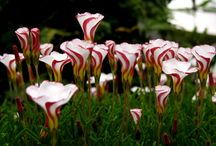 Unusual Plants & Flowers / Exotic, rare, beautiful, unusual, or downright strange plants, flowers, & fungi! If you enjoy nature or gardening you may enjoy my other boards too! / by Doug Harrington