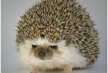 Hedgehogs<3