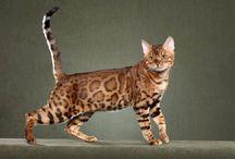 Gatos / Los gatos que me gustan