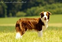 Beautyful Dogs