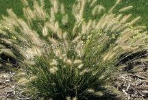 high plains plants