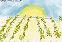 Illustration Spirit Sherry / Picture, Artwork, Illustration, Enlightenment... #lifestyle #vineyard #sherrywine #winetour #sunshine #sunset #spiritsherry