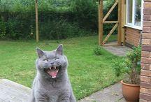 ProtectaPet Cat Garden Gates / Cat Garden Gates