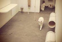 Cats&Crafts / Gatos amam mais as pessoas do que elas permitiriam. Mas eles têm sabedoria suficiente para manter isso em segredo Mary Wilkins