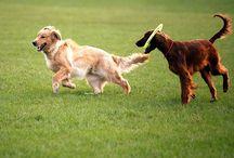 Proteger a dog park