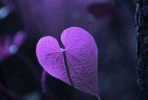 Hearts / by Marsha Ross