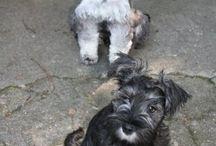 My Puppies