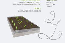 Sadzenie - Seeding