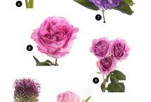 flori in culori