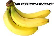 Yorkie Tips