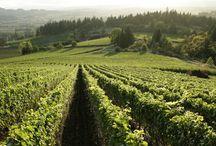 I wanna go work on a vineyard