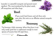 Plante contra insectelor
