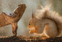 Animales, bajo la lluvia / Fotogalería | Bajo la lluvia