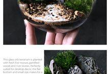 Terrarium Flowers +