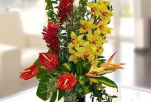 Tropical Arrangements