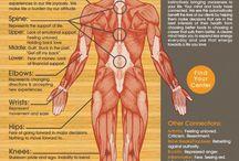 Body Charts
