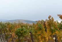 Seasons at Goose Ridge