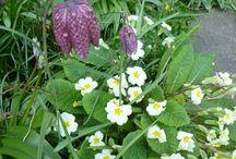 Garden / Fruit, veg and flowers as inspiration for a novice gardener in Suffolk.