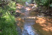 Manitou Creeks & Trails / by Manitou Springs