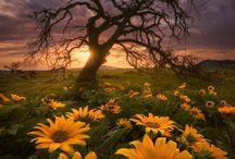 Fotografie přírody / balzám na duši