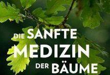 Baum.- Rezepte