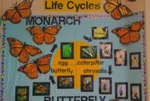 School~life cycles / by Nicki Thompson