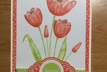 Tranquil Tulips - SU