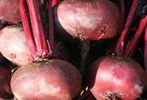 La box potagère de Mars / C'est la bonne saison pour semer tous les légumes au potager avec la box potagère de Mars !  http://www.cultiversonjardin.fr/box/36/Box-Potagere-de-Mars