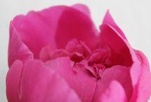 Blumen Frühjahr / Eine kleine Sammlung von Frühlingsblumen.