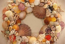 Sea Shells & Sea Creatures!