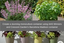 Container Gardening Fun / Creative ideas with planters