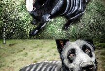Halloween: Pets