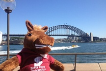 Where in the World is Bucky? / Our number 1 Bronco is a world traveler.