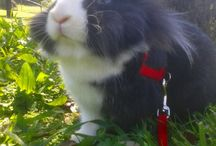 My little bunny / I and my little Sirius. True love ♥