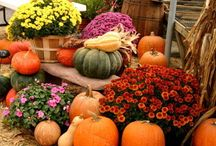 Gardening / #DIY and #HowTo tips for #gardens, #plants, and #flowers