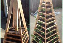 Bær pyramide