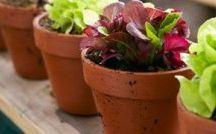 Κήπος / Ο κήπος είναι ένα μέρος στο οποίο πρέπει να χαλαρώνετε και να νιώθετε όμορφα. Για να το εξασφαλίσετε αυτό χρειάζεται να τον ποτίζετε συχνά και σωστά, ώστε να διατηρείτε τα φυτά και το γκαζόν σας υγιή και καταπράσινα. Στην ΠΑΝΑΓΡΟΤΙΚΗ θα βρείτε όλα όσα χρειάζεστε για το πότισμα, τη μεταφορά του νερού, το αυτόματο πότισμα και την περιποίηση του.