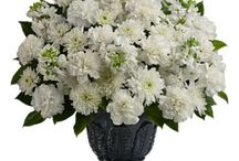 Sympathy & Funeral / Are you looking to send Sympathy & Funeral flowers to Brownsville and areas around Brownsville? Browse through the finest collection of Sympathy & Funeral flower arrangements below.