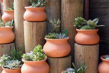 JARDINERIA / Plantas