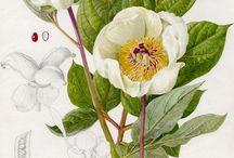 Landscape&Plant / plant, flower, landscape