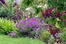 garden and outside things / by Vicki Skarda