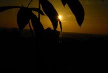 manado special sunrise