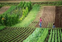 Farm. / by Anastasia Sunshine